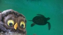 Murphy & Turtle
